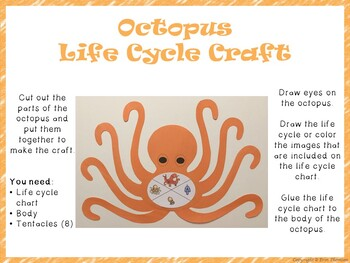 Octopus Life Cycle Craft