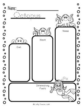 Octopus Report Guide