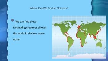 Octopus - Squid - Jellyfish Presentation