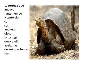 Oda a la tortuga