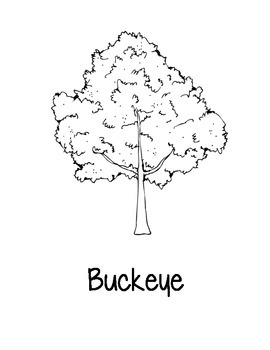 Ohio State Coloring Pages