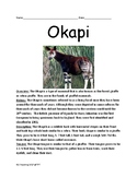 Okapi - forest giraffe informational article lesson facts questions