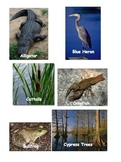 Okefenokee Swamp (Fun Hands On Lesson)