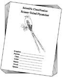 Oklahoma State Bird Notebooking Set (Scissor-Tailed Flycatcher)