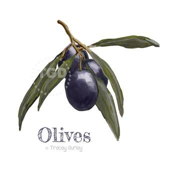 Olive clip art, garden clip art, olive branch Printable Tracey Gurley Designs