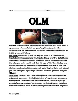 Olm - endangered salamander - informational article lesson questions vocabulary