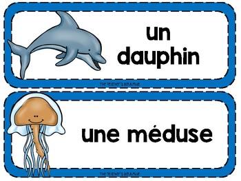 On s'amuse avec les animaux marins