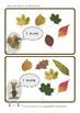 One More Autumn Leaf