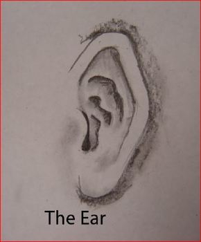 One way to draw an ear