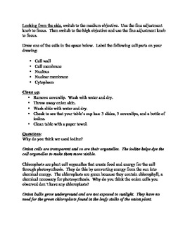 Onion Lab (plant cells) pdf