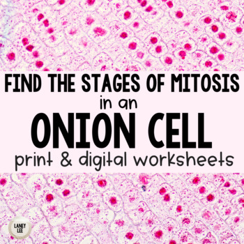 Onion Root Mitosis Identification Worksheet