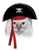 Online ESL - Halloween Cat Costume Activity Reward Prop - Seriously Funny VIPKID
