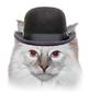 Online ESL Teaching - Cat Hat Activity Reward Prop - Seriously Funny VIPKID