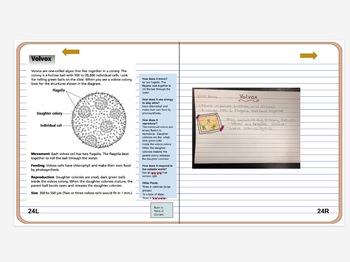 Online Interactive Notebook and Portfolio