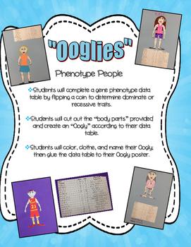 Ooglies - Phenotype People