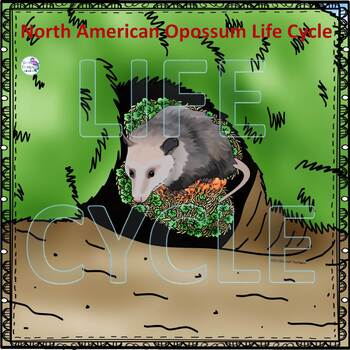 North American Opossum (life Cycle Spinner)