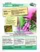 ORAL Presentations - CARRIBEAN: Carnaval, Che Guevara, mam