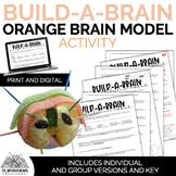 Orange Brain Diagram