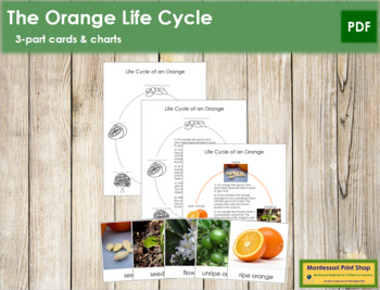 Orange Life Cycle Cards and Charts