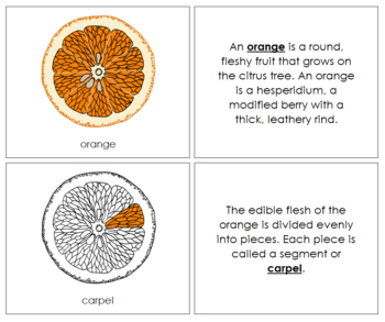 Orange Nomenclature Book