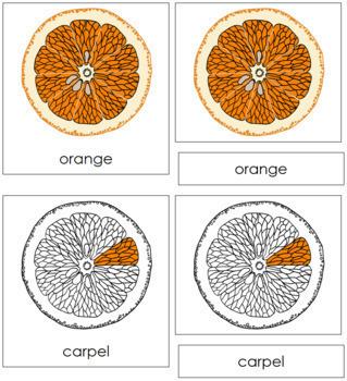 Orange Nomenclature Cards