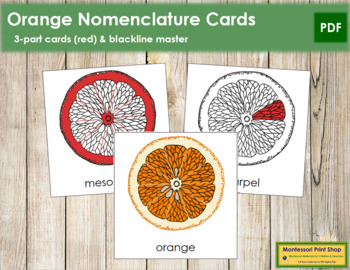 Orange Nomenclature Cards (Red)