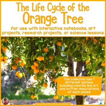 Orange Tree Life Cycle Activities, Crafts, and Printables by Elementary  MattersTeachers Pay Teachers