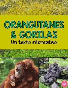 Orangutans and Gorillas - AN INFORMATIONAL TEXT IN SPANISH