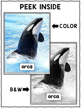 Close Reading Passage - Orca Activities