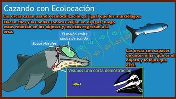 La Orca - Ballenas Asesinas - Presentación en PowerPoint y Actividades