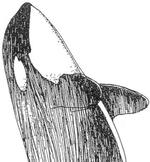 Animal Orcas Killer Whale Wksht Read Science 4 Reading Multiple Choice Questions