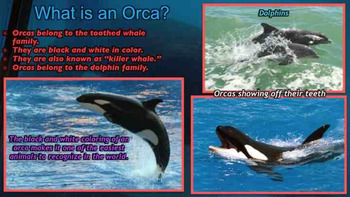 Orcas: The Killer Whales - PowerPoint & Activities