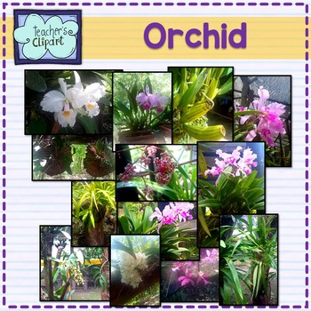 Orchid Pictures - stock photos For Personal and Commercial use