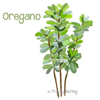 Oregano - oregano clip art, oregano Printable Tracey Gurley Designs