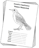 Oregon State Bird Notebooking Set (Western Meadowlark)