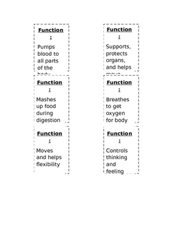 Organ Functions Foldable