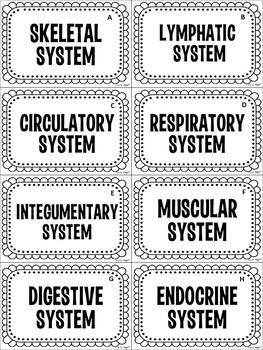 Body System Card Sort Activity (Organ Systems)