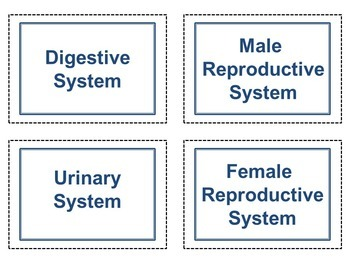 Organ System Mix and Match Cards for Anatomy & Physiology