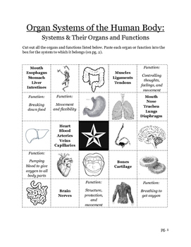Organ Systems & Their Functions