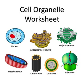 Organelle & Cell Type Worksheet