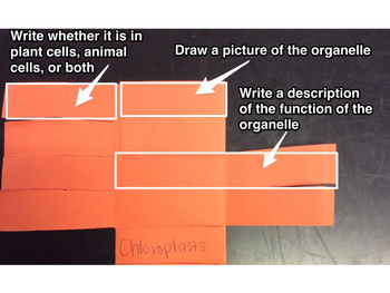 Organelle Foldable Instructions