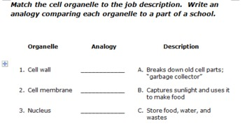 Organelle Functions and Analogies Practice