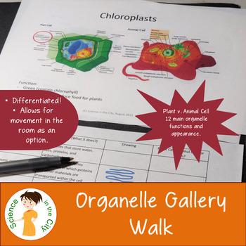 Organelle Gallery Walk