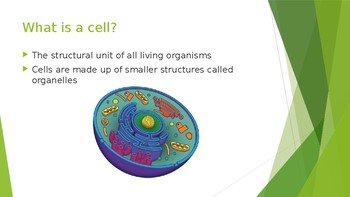 Organelle Powerpoint