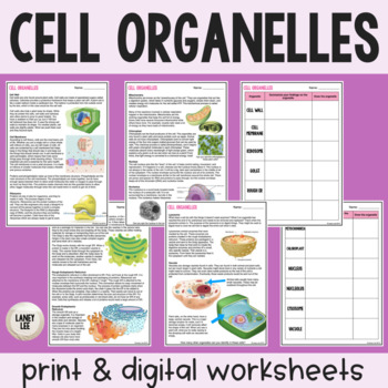 Organelle Readings Activity
