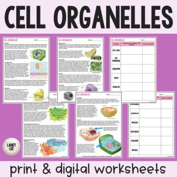 Organelle Readings Activity - Print & Google Versions