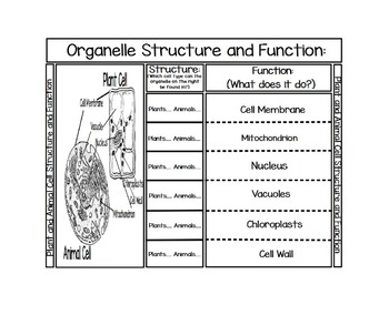 Organelle Structure and Function Foldable