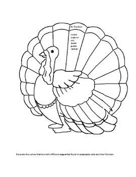Organelle Turkey