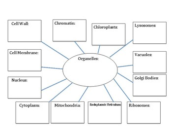 Organelles Web Organizer