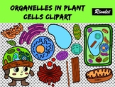 Organelles in plant cells clipart